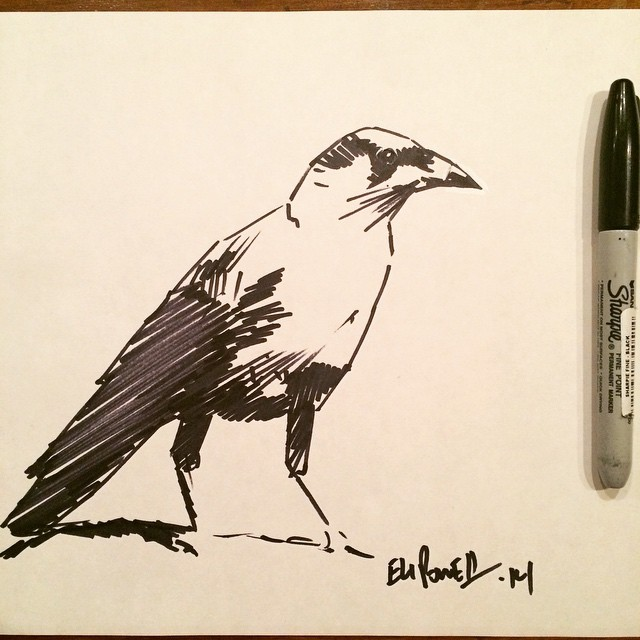 Inked crow sketch by Eli Powell